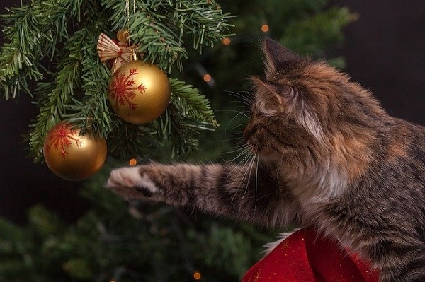 Fluffy Cat taking aim at Christmas Ornaments