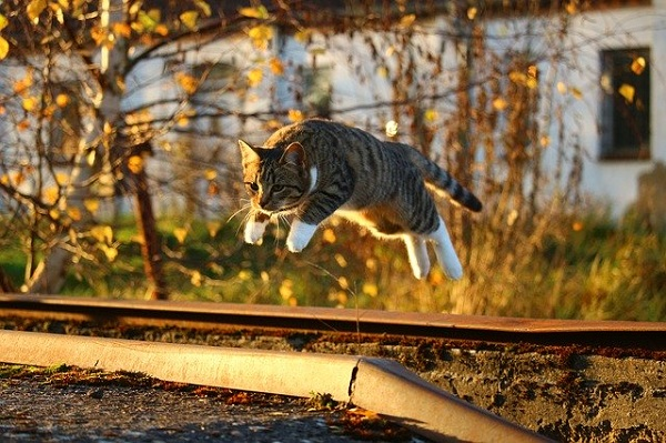 Leaping Cat in the Autumn with Evening Sunlight