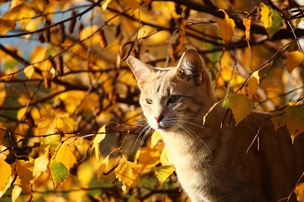 Orange Tabby Cat amongst leaves changing colors