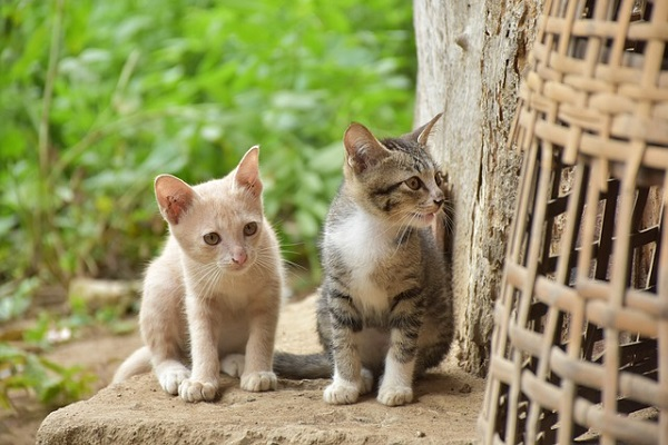Two Kittens looking around the corner