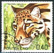 Clouded Leopard Postage Stamp from Laos